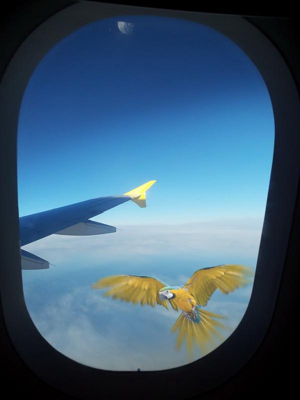 airplaine-parrot1